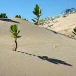ハムスターにとって砂遊びには様々な効果があります