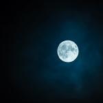 ハムスターはなぜ夜になると行動をする夜行性なの?