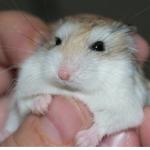 ハムスターに手を甘噛みされる。なめたり、噛むことに意味はあるのでしょうか。