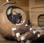 ハムスターの飼育、巣箱をかじる