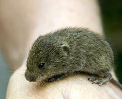 ハムスター マウス 感染