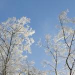 ハムスターが温度低下で冬眠になってしまう?疑似冬眠と言われる低体温症!