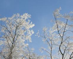 ハムスター 温度 冬眠