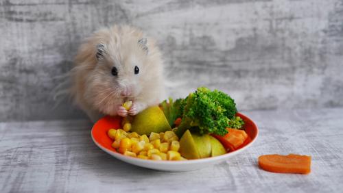 ハムスター ダイエット 方法